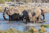 Elephants in Etosha — Stock Photo