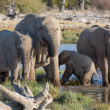 Elephants in Etosha — Stockfoto #40593317