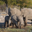 Elephants in Etosha — Stockfoto #40772283