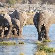 Elephants in Etosha — Foto de stock #40997083