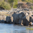 Elephants in Etosha — Stockfoto #41185315