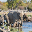 Elephants in Etosha — Foto Stock #41297245