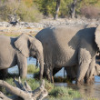 Elephants in Etosha — Foto Stock #41707731