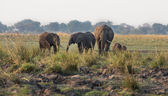 Group of Elephants — Stockfoto