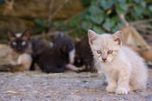 Kitty standing behind mom — Stock Photo