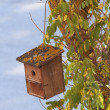 Rustic Forest Bird House — Stock Photo