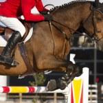 Equestrian jumper — Stock Photo #24159013