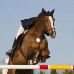 Equestrian jumper — Stock Photo #24159363