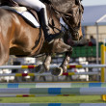 Equestrian jumper — Stock Photo #24159423