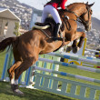 Female equestrian jumping obstacles on Show course — Stock Photo