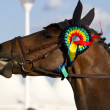 Horse head with prize winner of the competition — Stock Photo #24159515