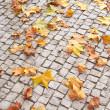 Fallen Leaves on Paver Brick — Stock Photo #30804839