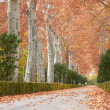 Autumn landscape — Stock Photo #30806139