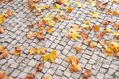 Fallen Leaves on Paver Brick — Stock Photo