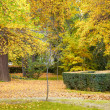Stock Photo: Yellow autumn landscape