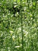 Bakgrund av gräs — Stockfoto