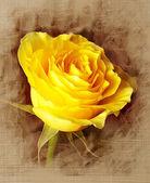 Fleurs d'art — Photo
