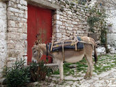 Cute Donkey, Traditional village of Qeparo — Stock Photo