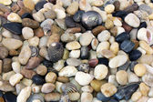 Sea Pebble — Stock Photo