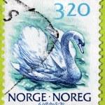 Swan Norwegian Stamp — Stock Photo