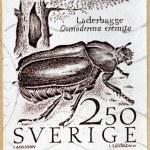 Hermit Beetle Stamp — Stock Photo #29603407