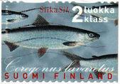 Whitefish Stamp — Stock Photo