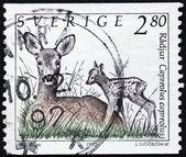 Roe och fawn stämpel — Stockfoto