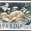 Stock Photo: Stoat Stamp