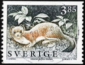 Stoat Stamp — Stock Photo
