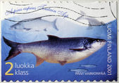 Asp Fish Stamp — Stock Photo
