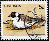 Hooded Dotterel Stamp — Stock Photo