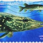 Pike Stamp — Stock Photo