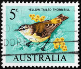 Yellow-Tailed Thornbill — Stock Photo