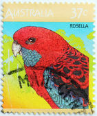 Rosella Stamp — Stock Photo