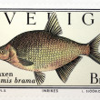 Common Bream Stamp — Stock Photo