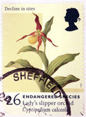 Orchid Stamp — Stock Photo