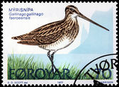 Common Snipe Stamp — Stock Photo