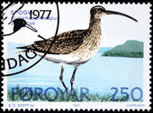 Whimbrel Stamp — Stock Photo