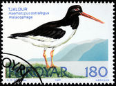 Oystercatcher Stamp — Stock Photo