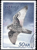 Gyrfalcon Stamp — Stock Photo