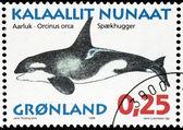 Killer Whale — Стоковое фото