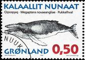 Humpback Whale — Стоковое фото