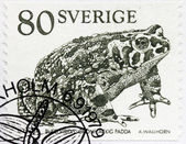 Toad Stamp — Stock fotografie