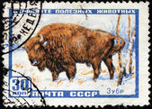 European Bison Stamp — Stock Photo