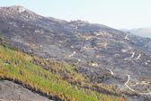Mountain fire — Stock Photo