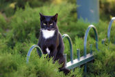 Cat sitting on a fence in the garden — Stock Photo