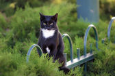 Black cat sitting on a fence in the garden — Stock Photo