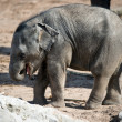 Baby elephant — Stock Photo #32034245
