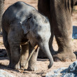 Baby elephant — Stock Photo #32034249