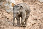 Baby elefant — Stockfoto